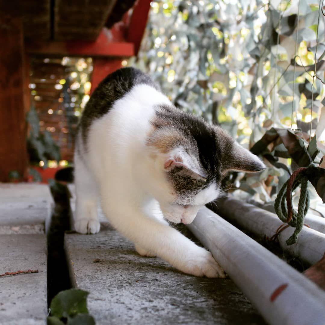 macskakert hasnyálmirigyrák vegán