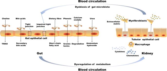 Dysbiosis medical definition