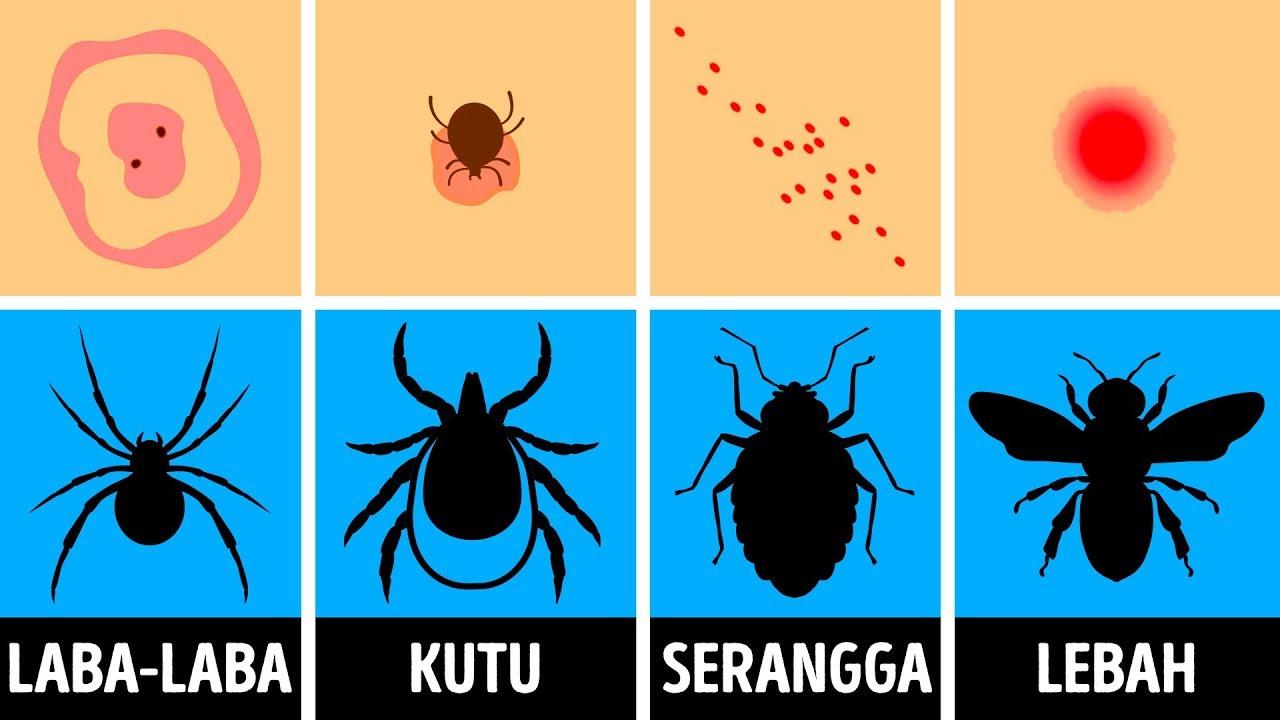 emberi papillomavírus fertőzés előfordulása A vastagbél tisztító méregtelenítésének előnyei