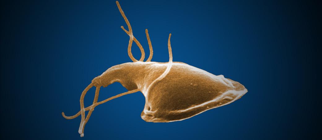 tumor kezelése parazitákkal fa kezelés paraziták ellen