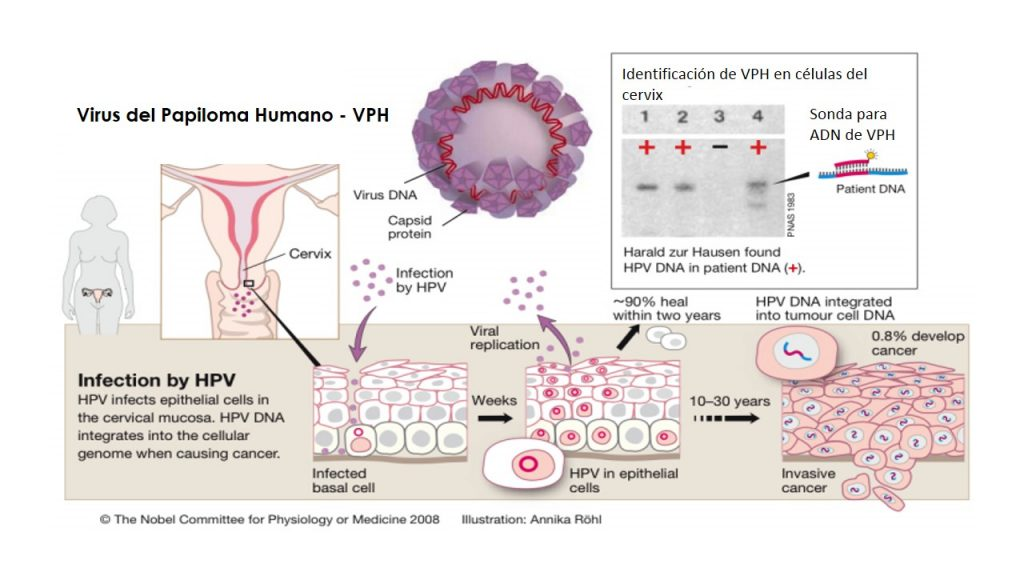 papilloma vírus hpv vph húgycső szemölcsök hogyan kell kezelni