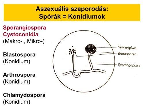helmint zoonózisos betegségek endometrium rák pcos-ból