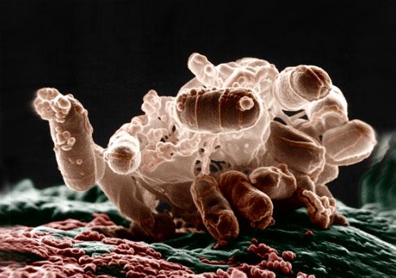 intorex parazitával történő kezelés