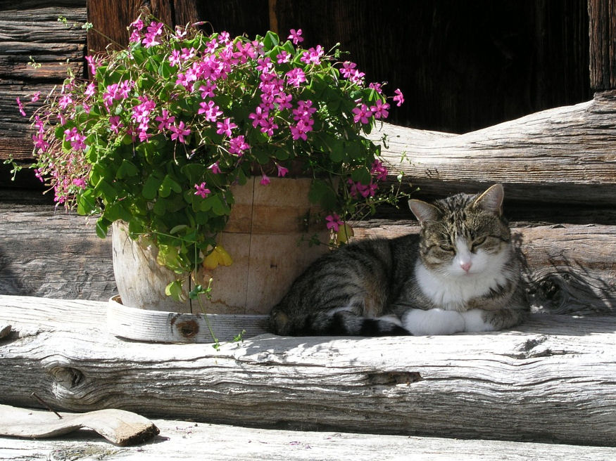 macskakert