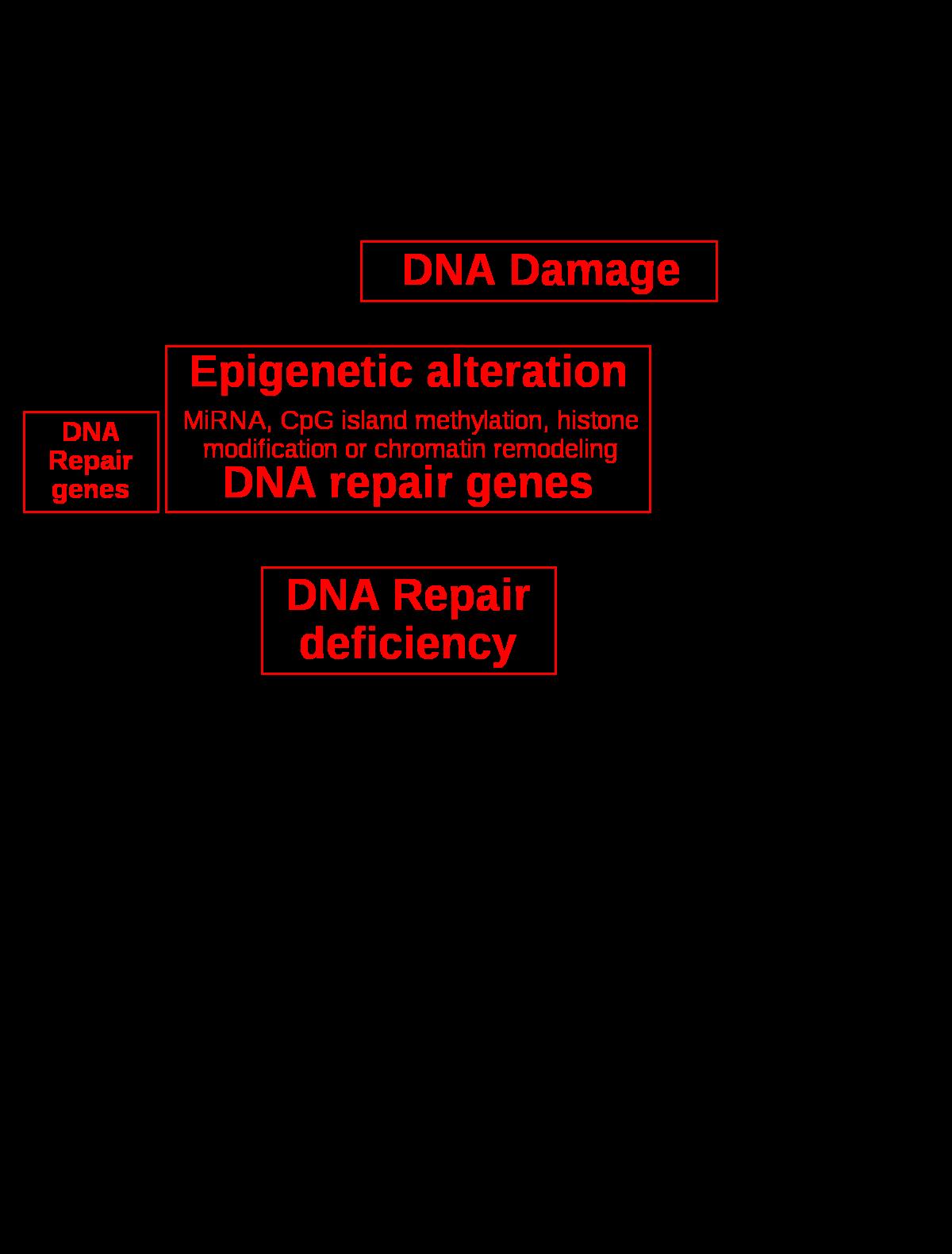 protozoon dex