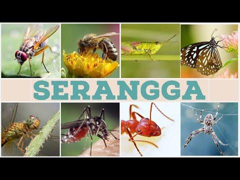 hogyan égnek a papillómák paraziták emberben