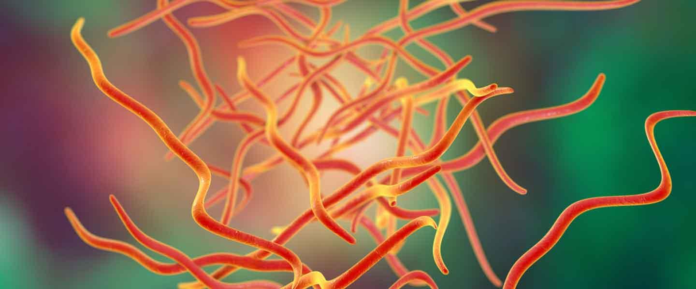 kako nastaju paraziták a szervezetben vélemények féreghajtó gyógyszerekről a gyermekek számára