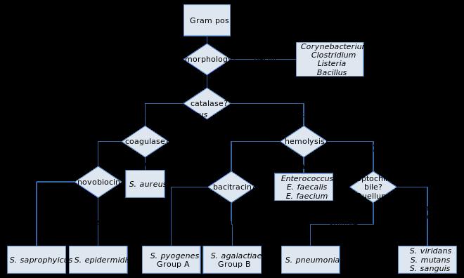 xanthomonas baktériumok pikkelyes papilloma a caes-ben