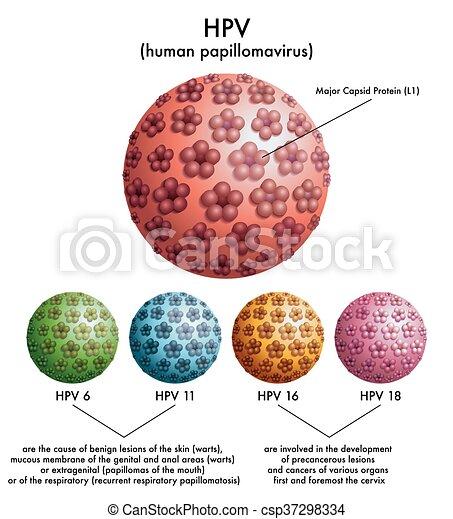 étel a paraziták kezelése során hpv vírus ansteckung