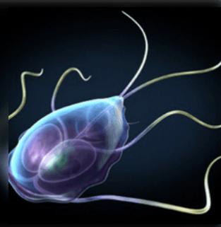 a giardia paraziták tünetei és kezelése gyermekeknél