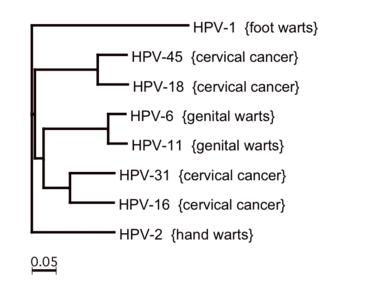 onkogén papilloma vírus helmint immun kitérés