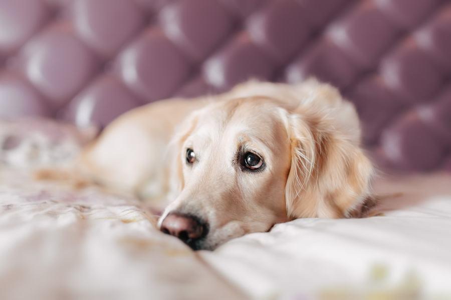 hasi rák kutyáknál