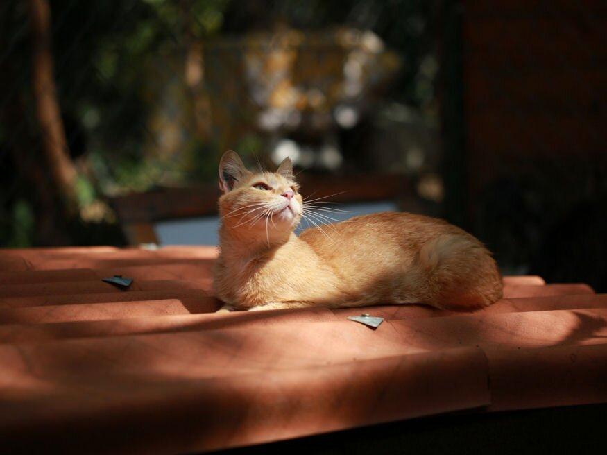 macskakert mire vezethetnek a szemölcsök