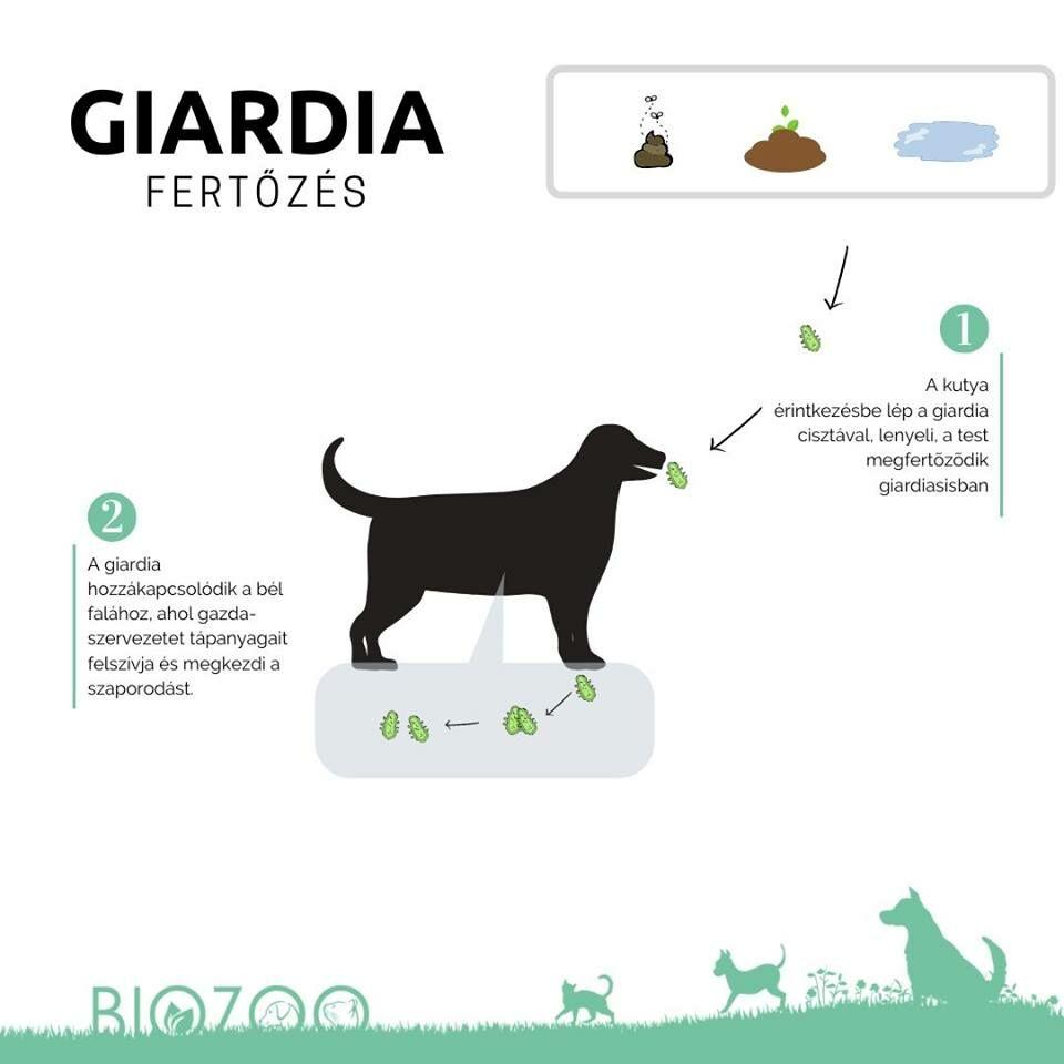 kondiloma a kriodestrukció után pinworms kezelő kutyák