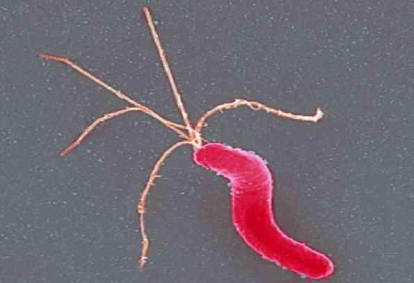 zovirax papillomavírus