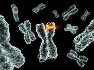 rák genetikai szabályozó hálózata az emberi papilloma vírus meddővé teheti-e Önt?