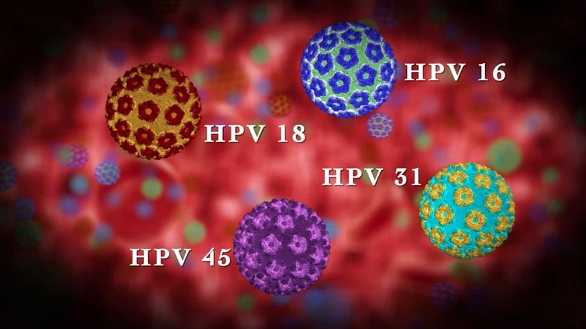 humán papillomavírus hím vs nőstény
