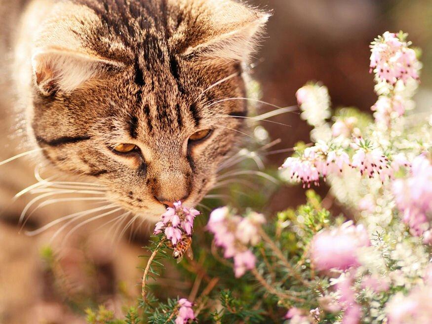 macskakert anthelmintice novartis