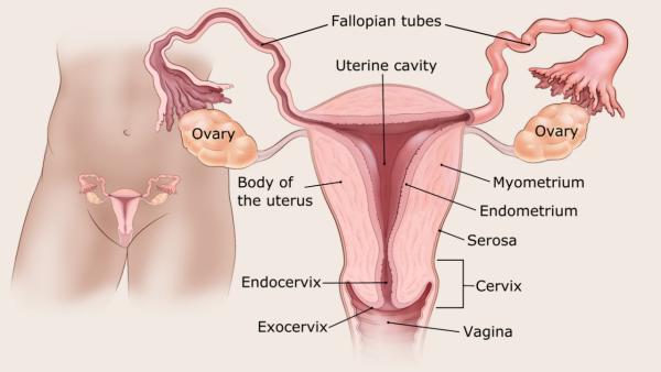 petefészek endometrium rák ricinusolaj méregtelenítésre
