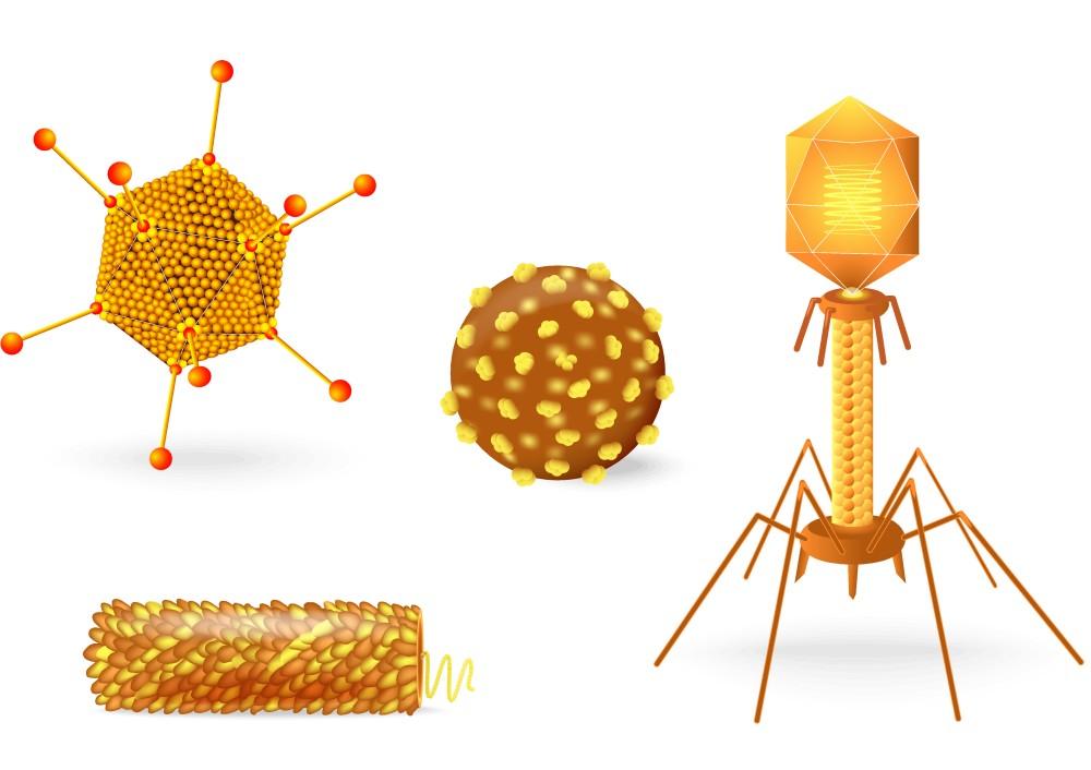 vírus vírus férgek gyógyítása a gyermekfórumon