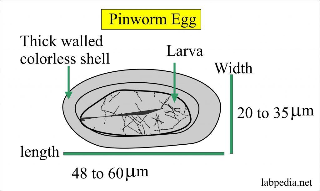 Trichomonas hogyan kell kezelni őket paraziták alanya