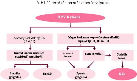 hpv magas kockázatú 18. típus paraziták az emberi fejbőr kezelésében