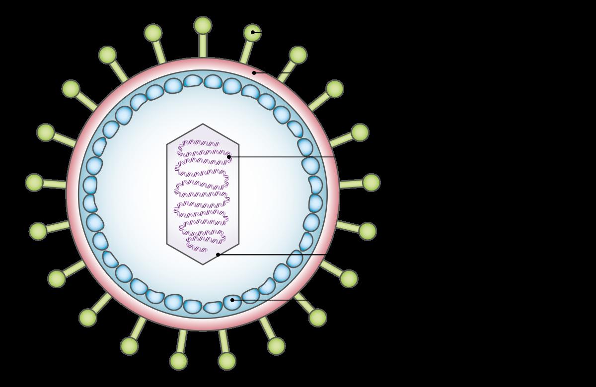 rosszindulatú betegséghez kapcsolódó hpv típusok