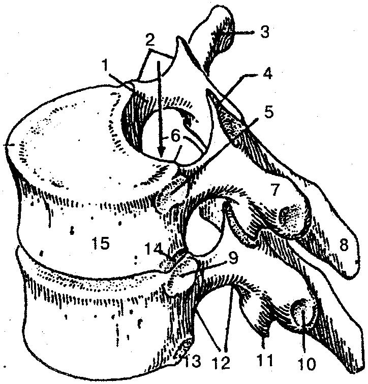 Sacroiliacis ízület