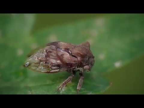 helminticid l ţțțț távolítsa el a papillómát tegyen egyet