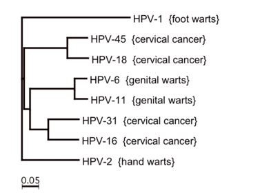 hpv vírus bei módon mi a giardia
