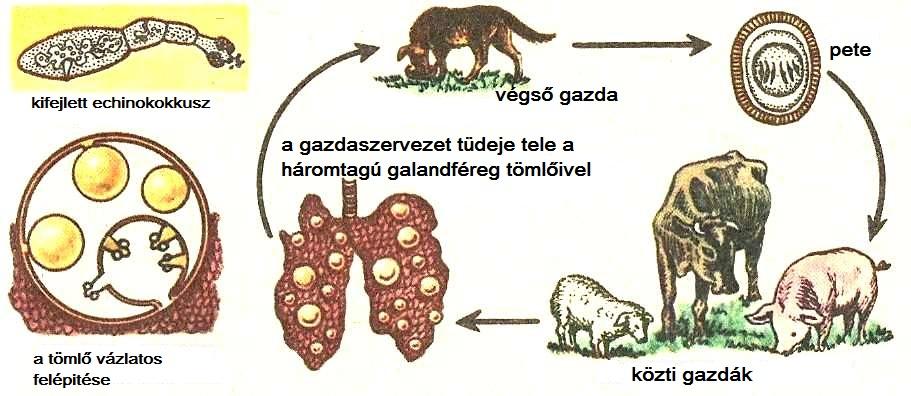 egy személy parazitáinak kezelésére szolgáló gyógyszerek giardia gyógyulási étrend