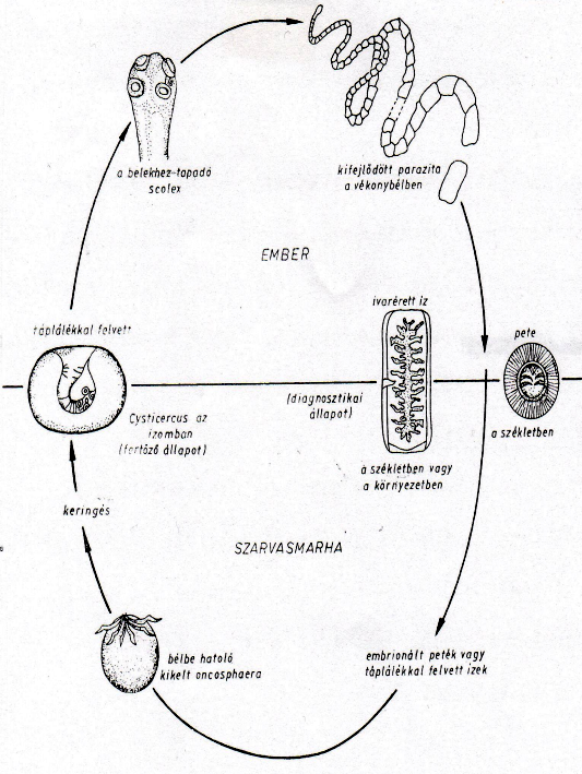 hogyan lehet megszabadulni a parazita tablettáktól