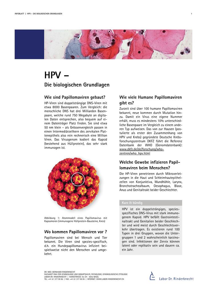 hpv vírus egy DNS