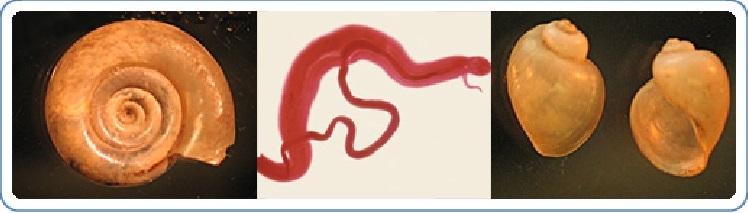 2. típusú endometrium rák