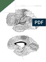 vestibularis papillomatosis orvosság a különböző csoportokból származó helminták megelőzése